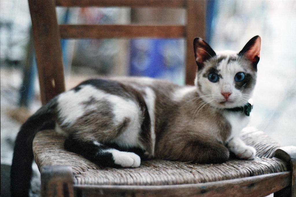 ματια γατακι