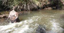 καγκουρό με ανθρώπινους μύες σε ποτάμι