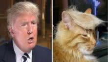 το μαλλί του Ντόναλντ Τραμπ μοιάζει με της γάτας