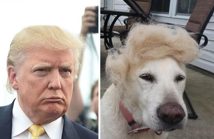 το σκυλάκι έχει τρομερή ομοιότητα με τον αμερικάνο πρωθυπουργό