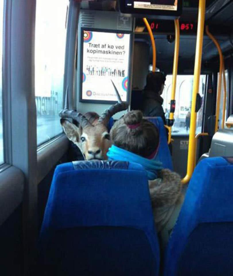 κορίτσι με ελάφι σε λεωφορείο