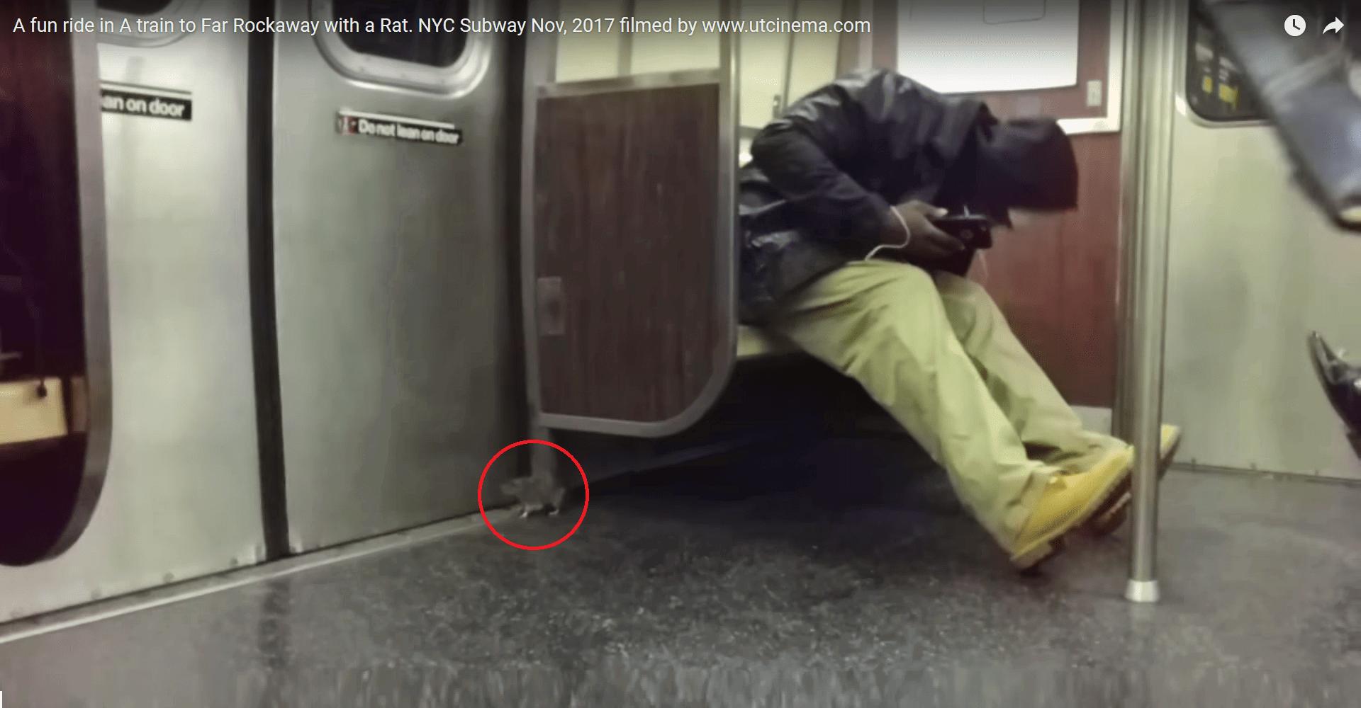 ποντίκι σε τραίνο