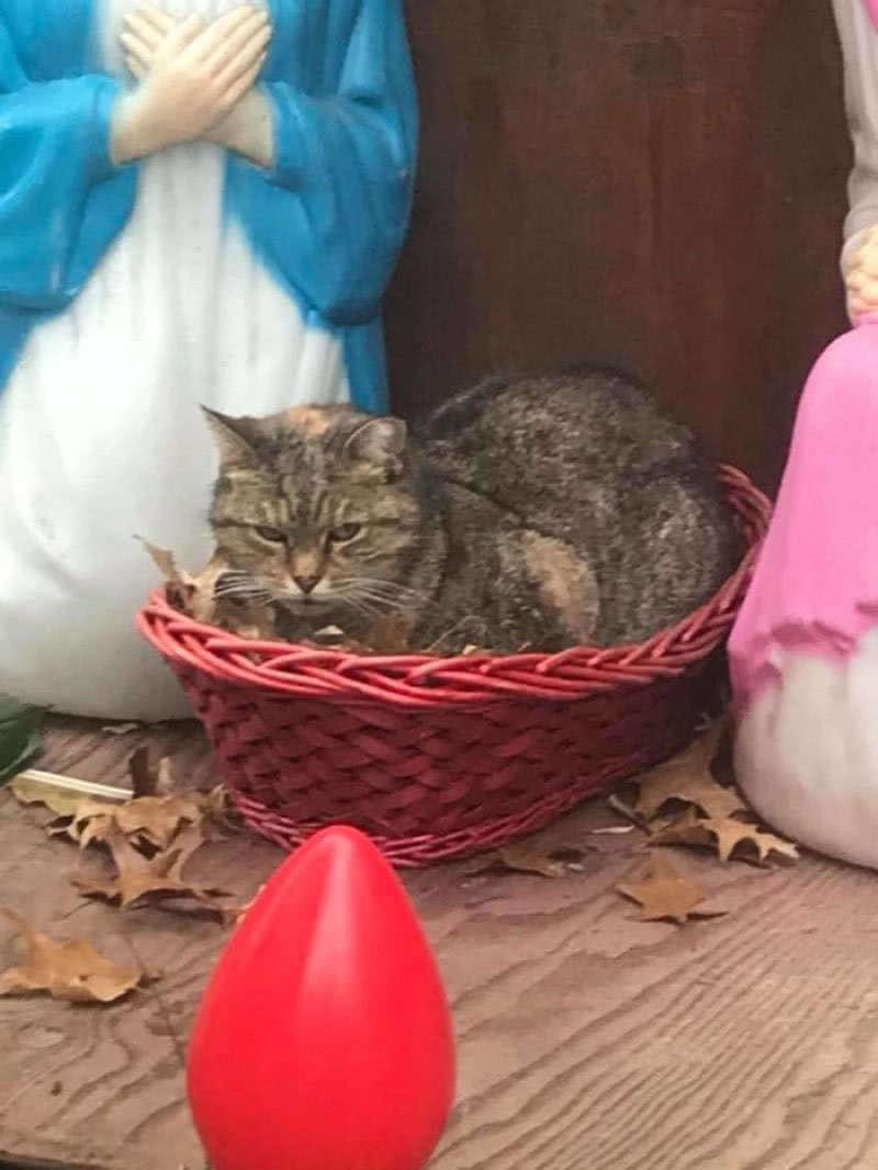 γάτα σε καλαθάκι