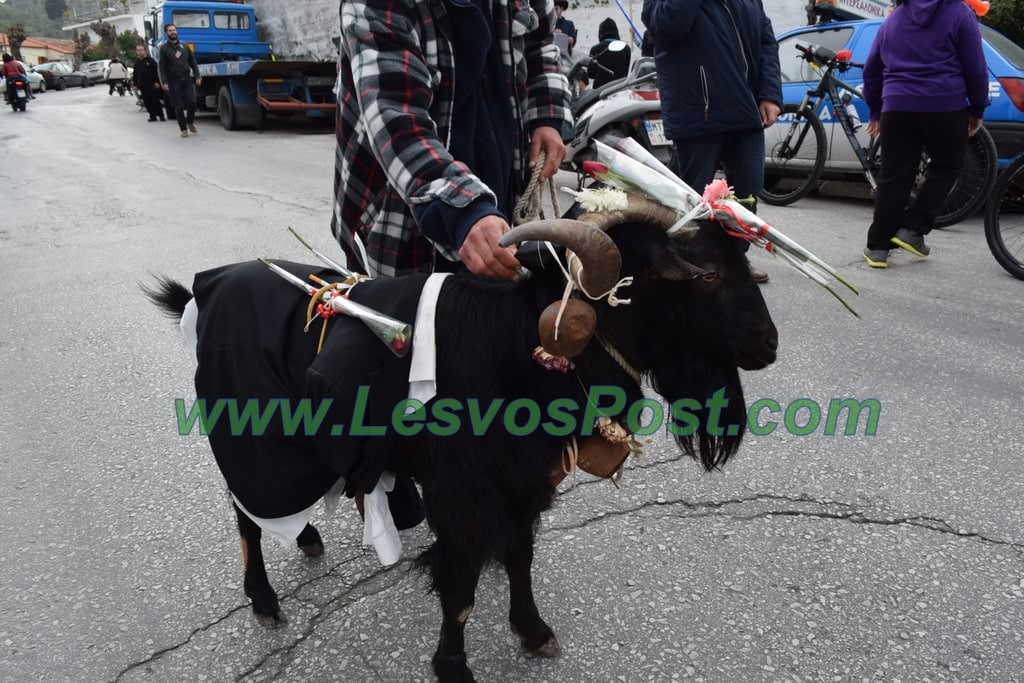 το ζώο σε αποκριάτικη παρέλαση