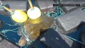 χελώνα με κόκα
