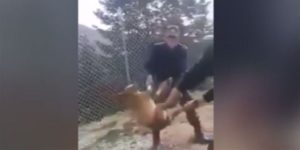 κακοποίηση ζώου
