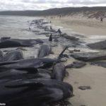 νεκρές φάλαινες