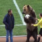 αρκούδα στο γήπεδο