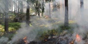 δάσος φωτιά