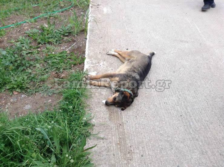 δολοφονημένο ζώο