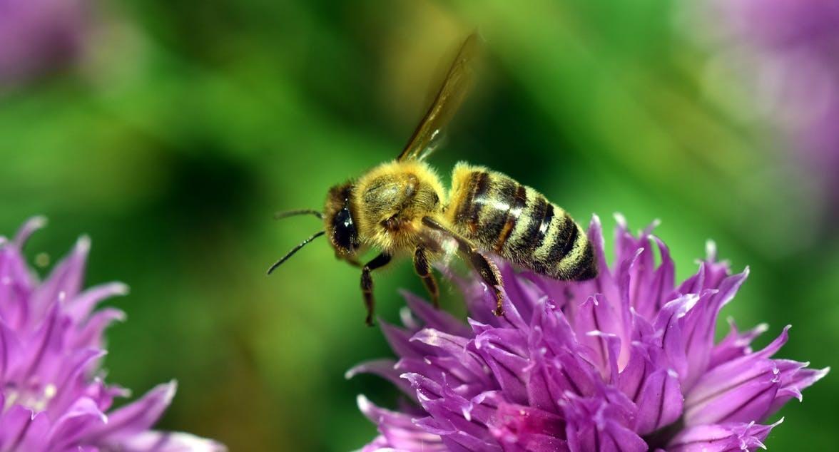 Άργος: Άνδρας 60 χρονών πέθανε από το τσίμπημα μέλισσας