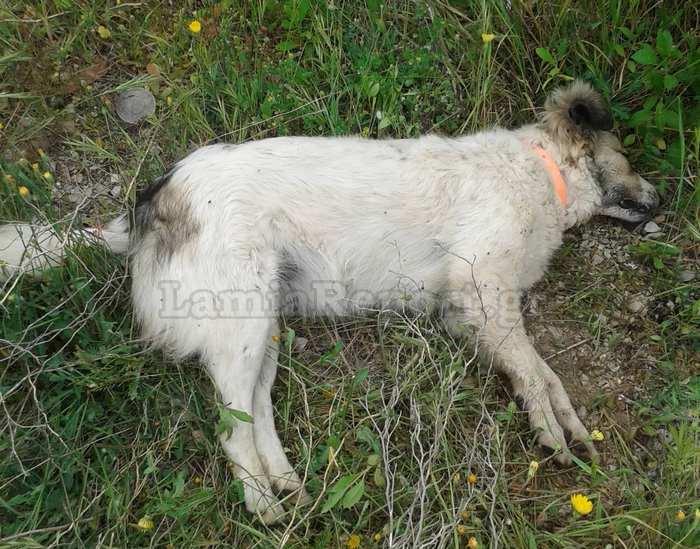 σκοτωμένο ζώο