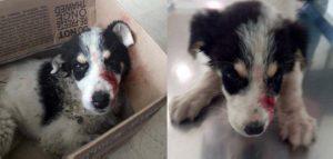 χτυπημένο σκυλί