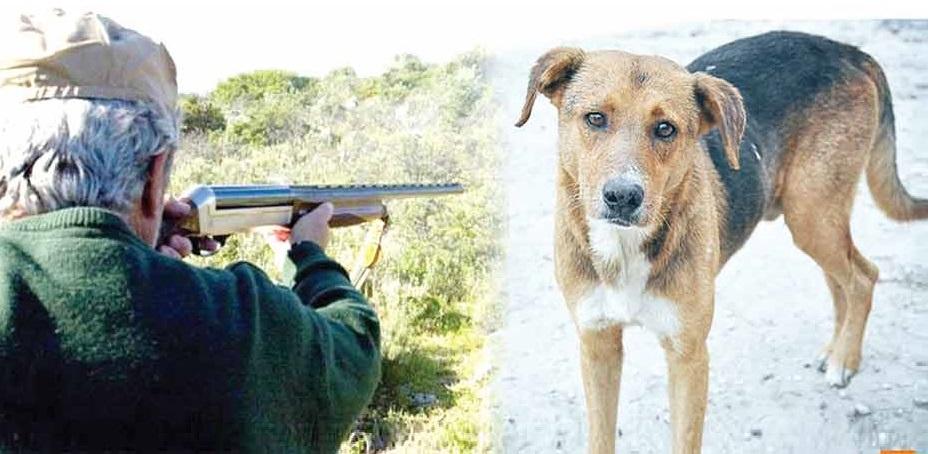 πυροβολισμός σκύλου
