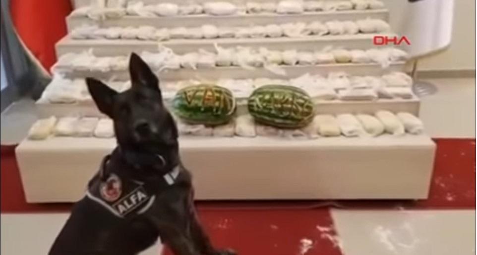 σκύλος και ναρκωτικά