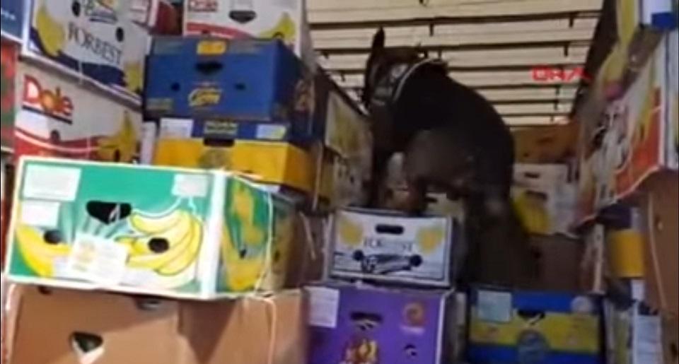 σκύλος σε φορτηγό με φρούτα