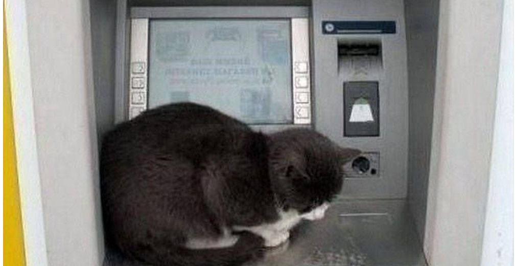 γάτα σε atm τράπεζας