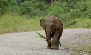 Σκότωσαν σπάνιο ελέφαντα επειδή κατέστρεψε τα χωράφια τους – News.gr