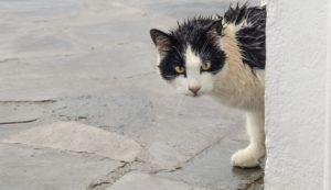 γατούλα στη βροχή