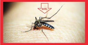 κουνούπι τσίμπημα