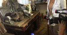 γάτος στη μόσχα