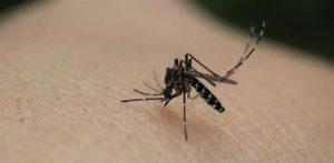 κουνούπι στο δέρμα