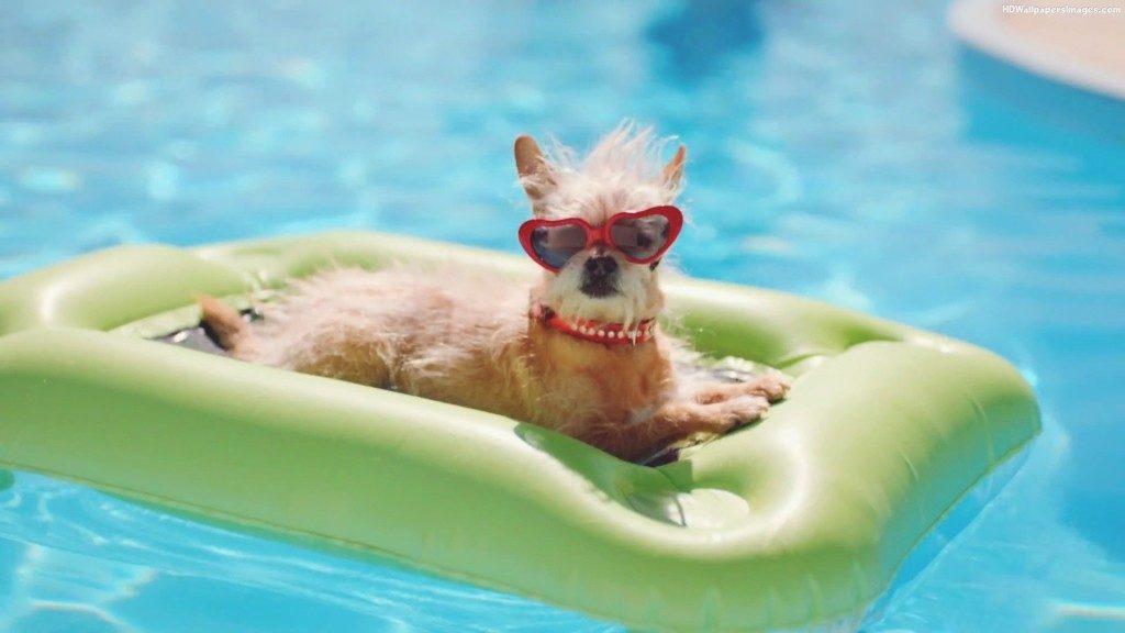 σκύλος, κολύμπι