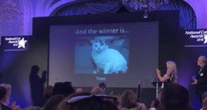 βραβείο σε γάτο