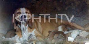 σκυλίτσα με κουταβάκια