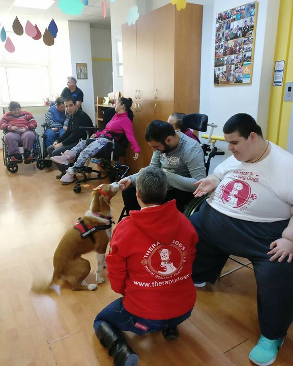 therapy dogs σε νοσοκομείο