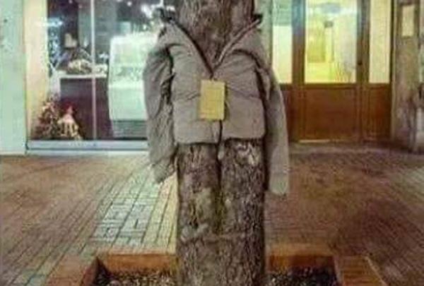 μπουφάν σε δένδρο