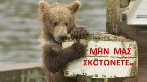 αρκούδα προστασία