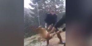 κακοποίηση σκύλου