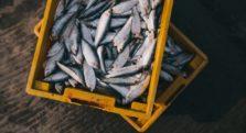 ψάρια αγορά