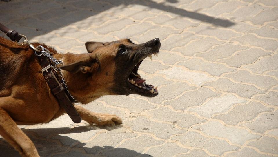 αγριεμένος σκύλος