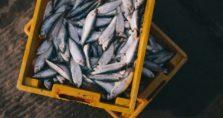 ακατάλληλα ψάρια για κατανάλωση, κατασχέθηκαν σε λαϊκή του πειραιά