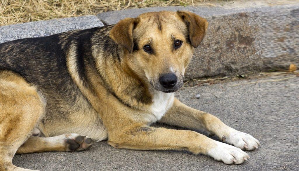 υπεγράφη η κύα για χρηματοδότηση καταφυγίων αδέσποτων ζώων από δήμους