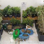καλλιεργούσε 51 δενδρύλλια κάνναβης στο υπόγειο του σπιτιού του
