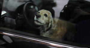 πέθανε σκύλος κλειδωμένος σε αυτοκίνητο, από τη ζέστη
