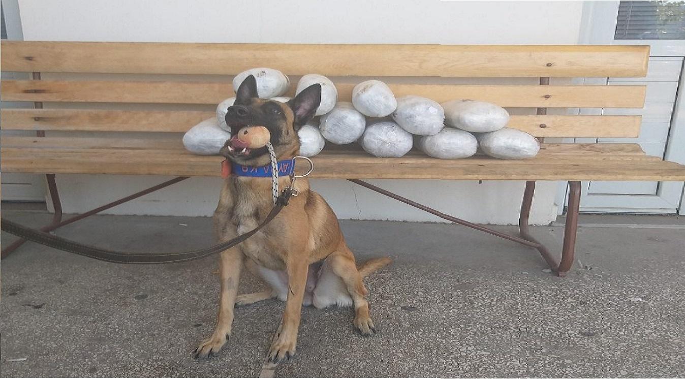 Ηγουμενίτσα: Αστυνομικός σκύλος εντόπισε 15 κιλά χασίς σε ΙΧ – Video